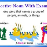 Collective Noun with examples, definition and more details